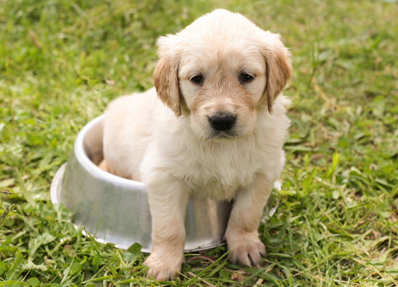 Families are being warned against fuelling the illegal sales of puppies